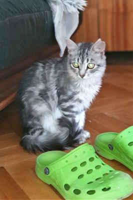6.7.2020 - Karmela zůstává z celého případu koček z Archlebova nejbázlivější. Jde na ni sáhnout například při krmení, ale i po půl roce se hodně člověka bojí ...