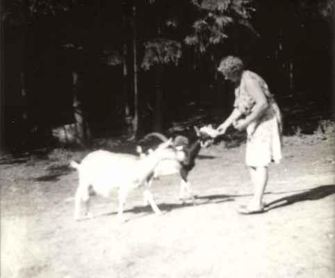 A tady s kozami.