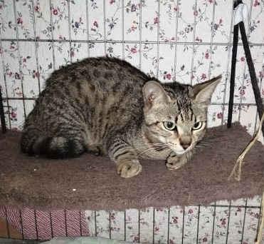 18.6.2020 - Oznamovatel nahlásil, že našel na ulici Měšťanská v Hodoníně kočku. Kočka má asi 7 měsíců, je hladová a velice vyhublá. Umístěna do karantény a na FB je zvěřejněna výzva, zda ji někdo nehledá. Dostala jméno Galina.