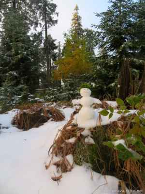 18.října na Boubíně, barevná břízka v pozadí vypadá aktuálně mezi lehce posněženými smrčky a nad sněhovou pokrývkou skoro jako exot :) - poslal Jenda