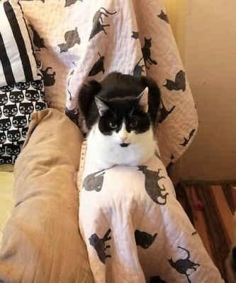 16.11.2020 - O Kolombínu se nikdo nepřihlásil, přestože na veterině zjištěno, že už je kastrovaná. Není u nás spokojená, velké množství koček jí nedělá dobře, ale k člověku je milá a mazlivá. Hledáme jí domov jako jedináčkovi nebo u jedné kočičky, raději v domku se zahradou.