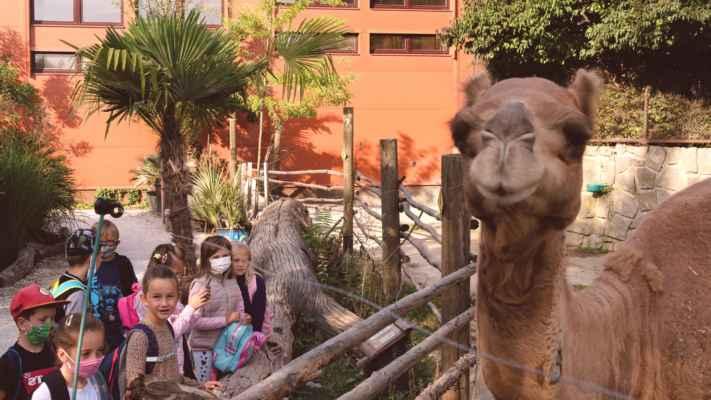 ZŠ Mžany 2020/9 - Safari Park Dvůr Králové (projektový den)