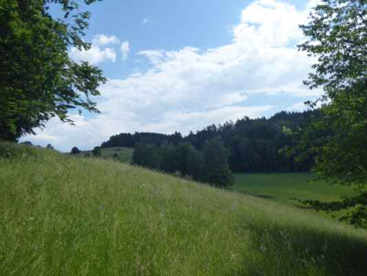 Rašeliniště Vidlák vpravo pod loukou