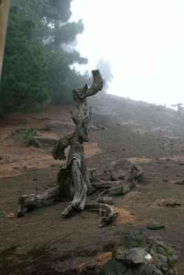 ...v minulosti se sem zaběhl i dřevěný klokan...