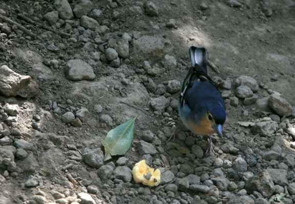 ...i malým ptáčkům...