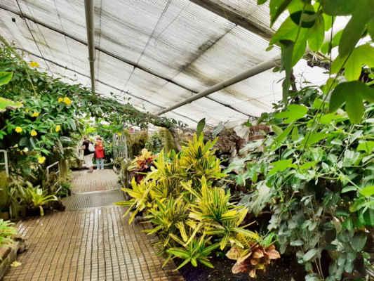 a jsme v dalším skleníku  - Tropickém