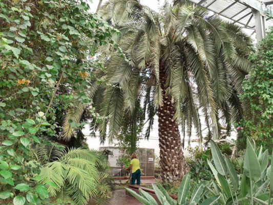 a poslední palmový skleník