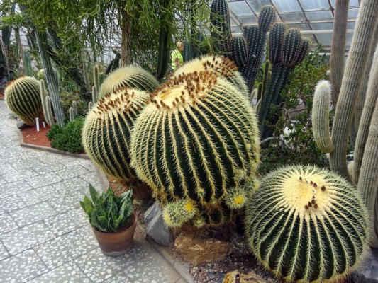 obrovské kaktusy doslova vyráží dech, jsou nádherné