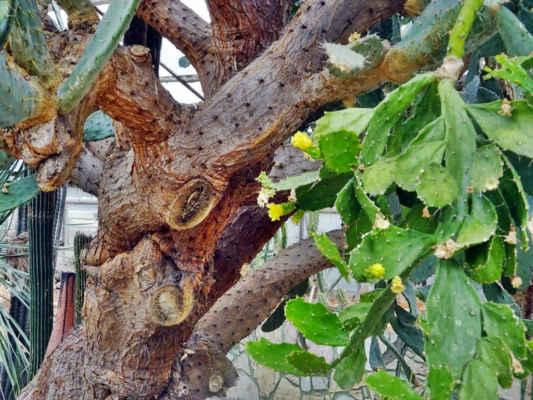 tady už kaktus připomíná strom...