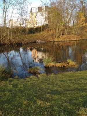 Rybník Aloisov v Centrálním parku Černý Most  Foto: Zuzana Pilecká - 21.11.2020 - Kdo bude trpělivý, možná na travnatém ostrůvku objeví nutrii, nebo co to je :)))