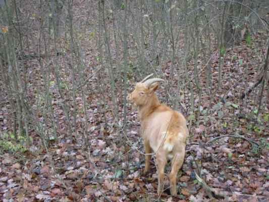 jen tak, v lese... bez plotu... no, proč ne? :-)