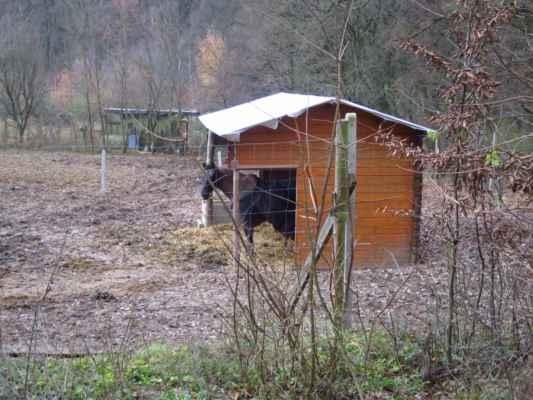 koník tiše závidí - ten zůstal chudák za plotem